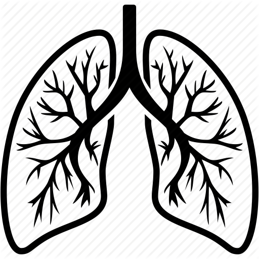 Human Lungs Clipart Black And White