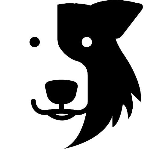 Zak The Collie Dog On Twitter