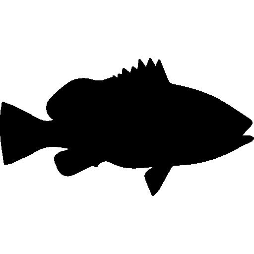 Fish Shape Of Nassau Grouper Icons Free Download