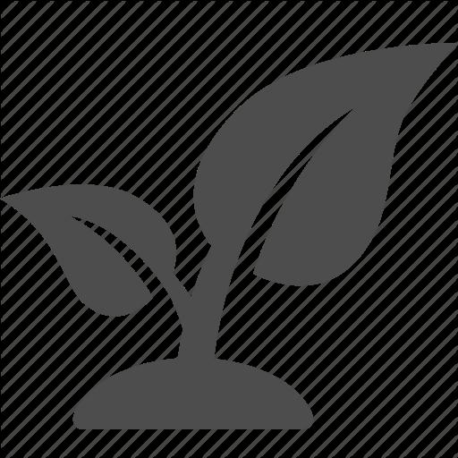 Corn Plant Icon Images