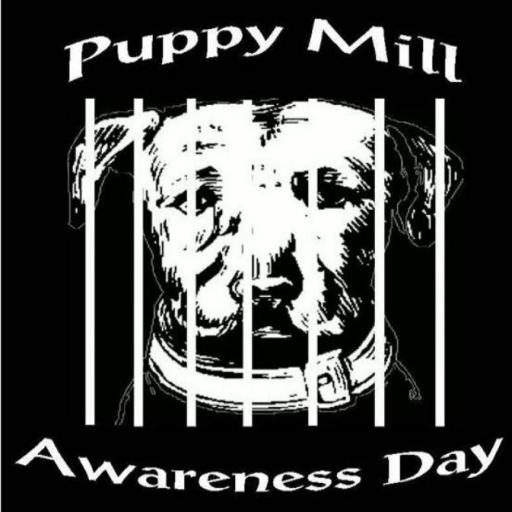 Google News Feed Puppy Mill Awareness Day