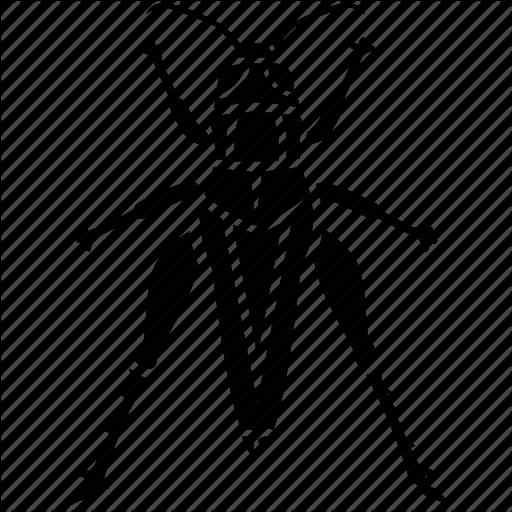 Bug, Chapuline, Cricket, Grasshopper, Insect, Katvdid, Locust Icon