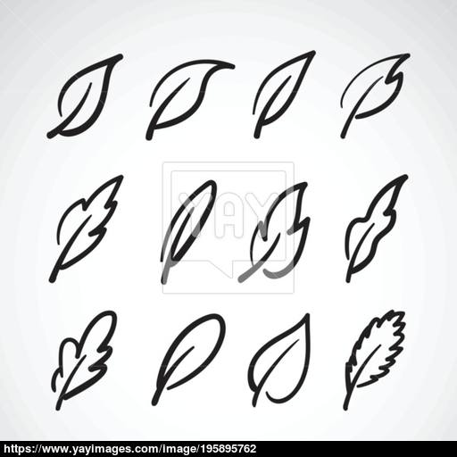 Vector Leaves Icon Set On White Of Leaf Lo