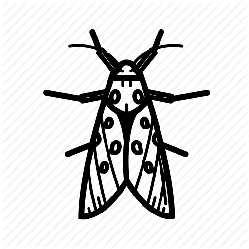 Attenborough, Bug, Butterfly, Fly, Moth, Night Icon