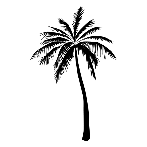 Palm Tree Silhouette In Black