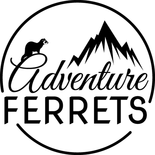 Sunny Jasper National Park Adventure Ferrets