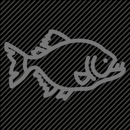 Fish, Freshwater, Piranha, River Icon