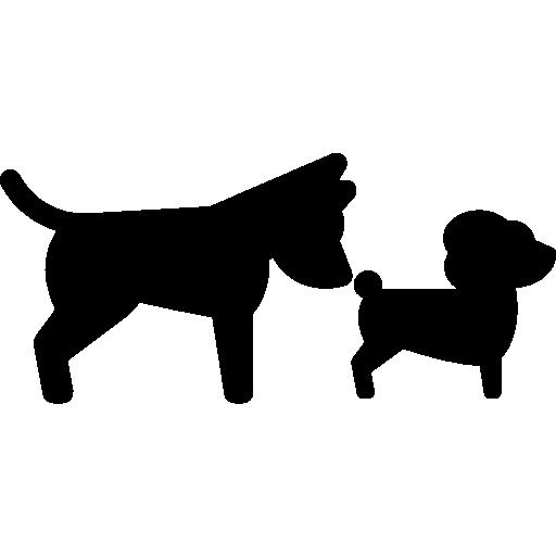 Dog Smelling Dog