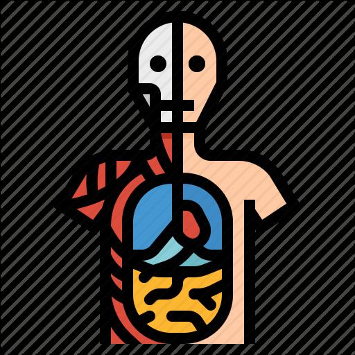 Anatomical, Anatomy, Human, Position Icon