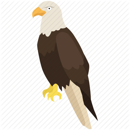 America, Bald Eagle, Falcon, Hawk, Raptor, Usa Icon