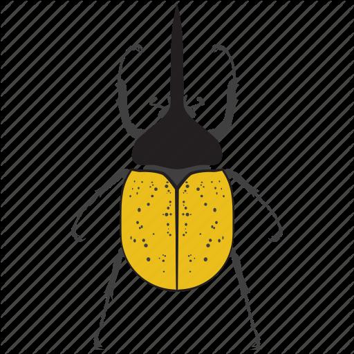 Beetle, Bug, Insect Icon