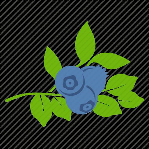 Blueberries, Blueberry Icon