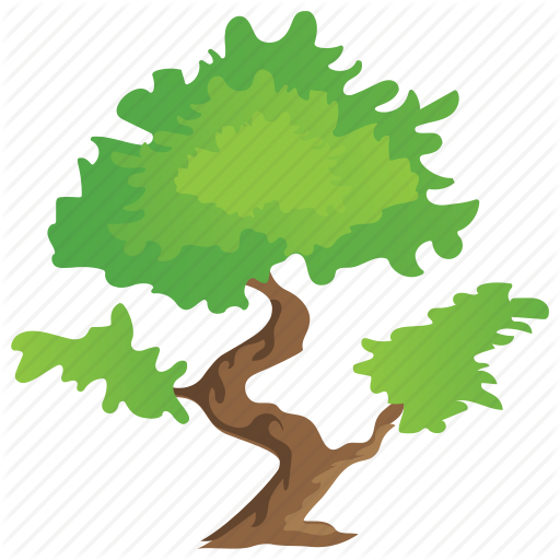 Bonsai Tree, Decorative Tree, Grafting, Small Trees, Umbrella Tree