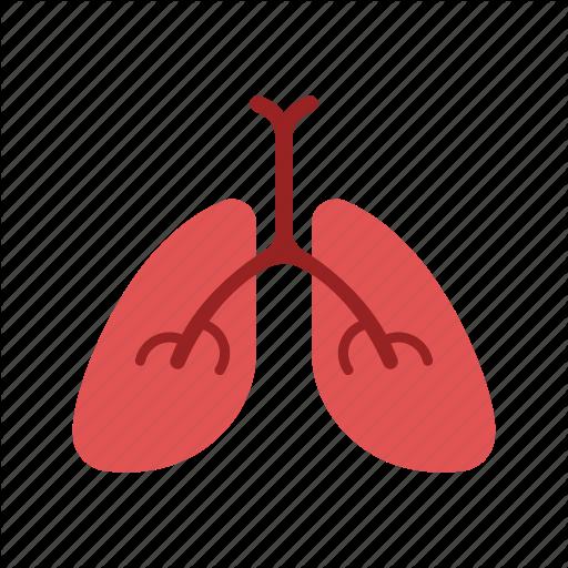 Anatomy, Biology, Breath, Lung, Organ Icon