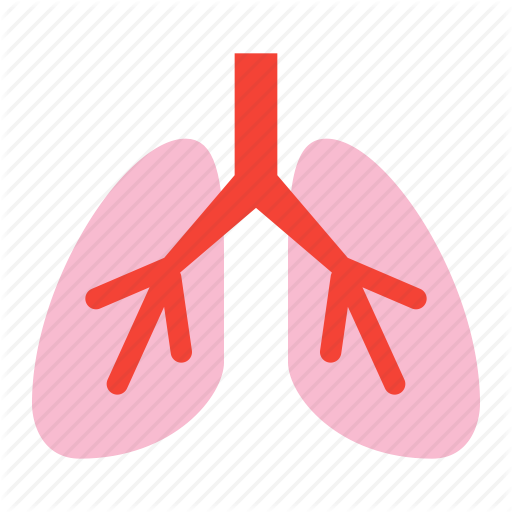 Anatomy, Breath, Lung, Lungs, Organ, System Icon