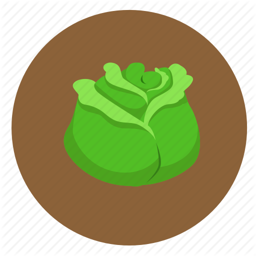 Cabbage, Food, Fruit, Vegetable Icon
