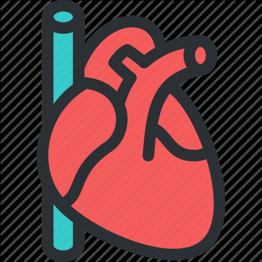 Cardio, Cardiology, Cardiovascular, Health, Hearth, Medical, Pulse