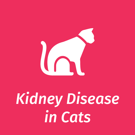 Information On Chronic Kidney Problems In Older Cats Elanco Uk