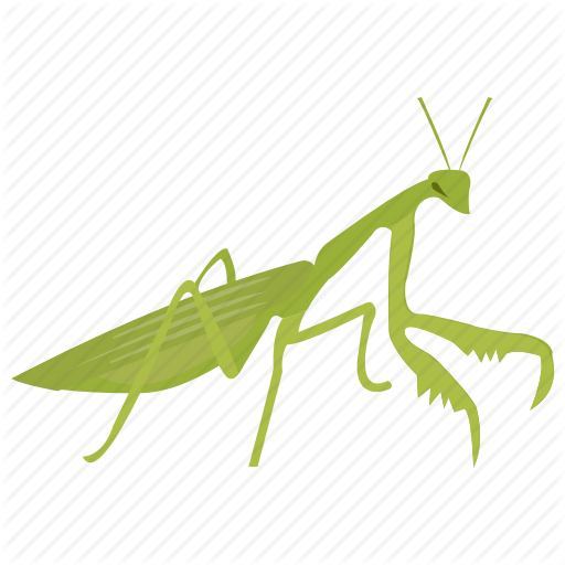 Animal, Grasshopper, Insect, Invertebrates, Tropical Insect Icon