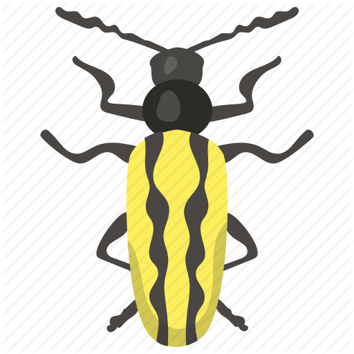 Blister Beetle, Dung Beetle, Insect, Prejudicial Insect, Scarab