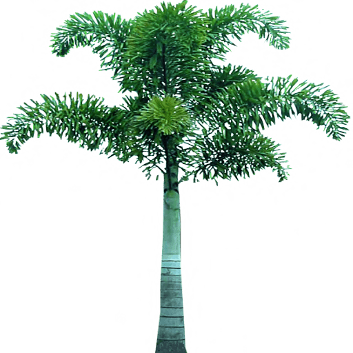 Download Free Palm Tree Png Icon Favicon Freepngimg