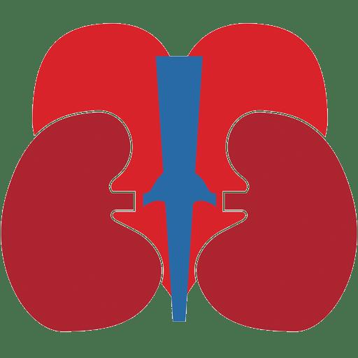 Chronic Kidney Disease, Kidney Transplant, Acute Kidney Failure