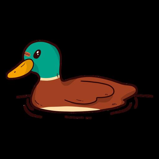 Cute Drake Duck Wild Duck Beak Water Swimming Flat