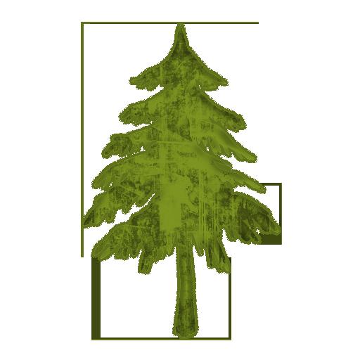 Evergreen Or Fir Tree