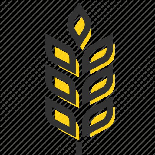 Barley Vector Spike Wheat Huge Freebie! Download For Powerpoint