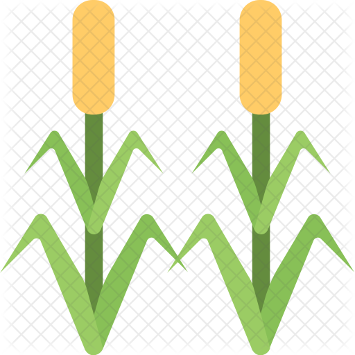 Corn Field Transparent Png Clipart Free Download