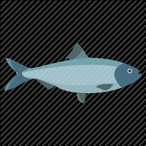 Fish Vector Png