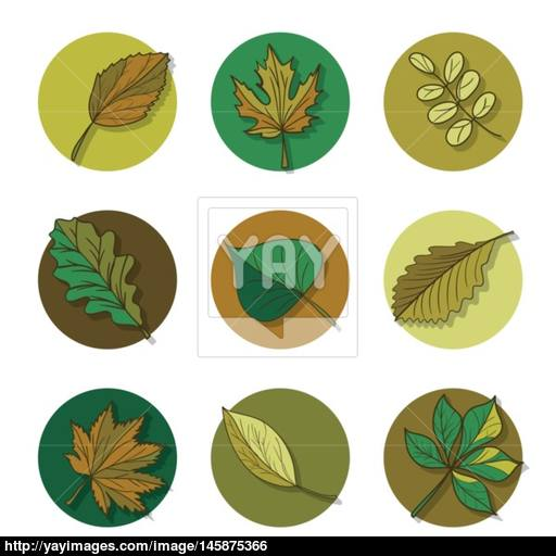 Leaves Icon Green Leaf Of Forest Tree Vector