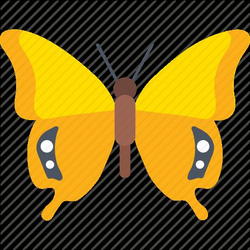 Butterfly Species, Cartoon Butterfly, Cute Butterfly, Insect