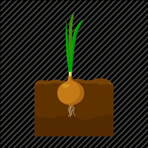 Farm, Fruit, Harvest, Onion, Plant, Vegetable, Vegetable Garden Icon