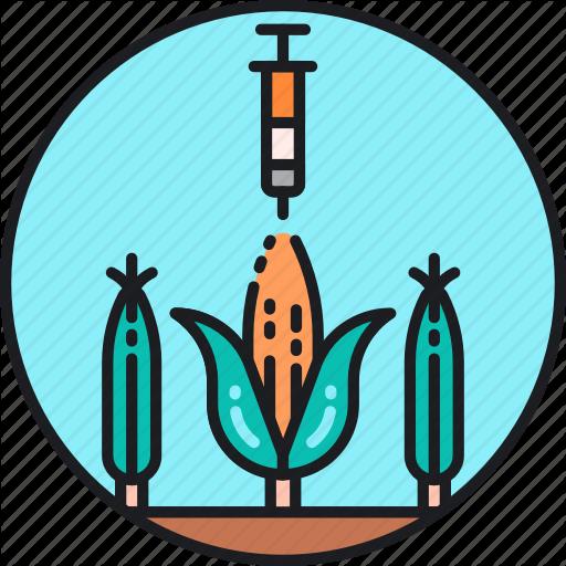 Artificial, Corn, Genetic, Genetically Modified Organism, Gmo