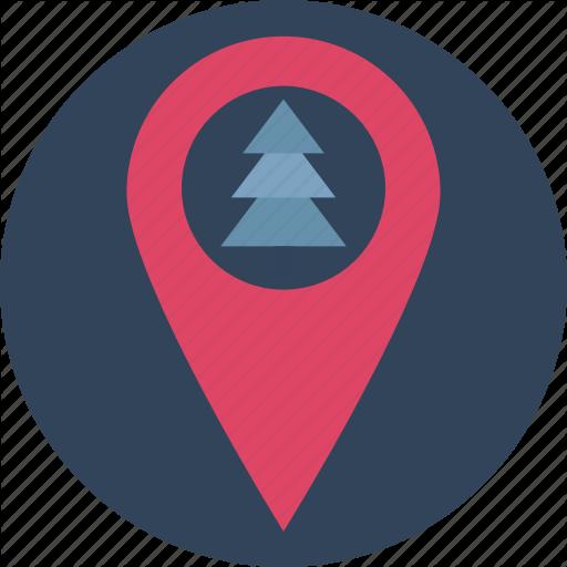 Christmas Tree, Fir Tree, Forest Location, Garden Location, Jungle