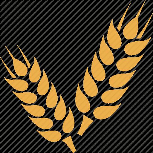 Crop, Grain, Wheat, Wheat Crop, Wheat Gran