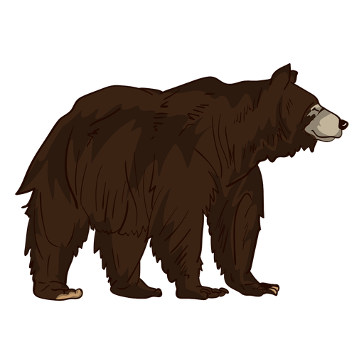 Brown Grizzly Bear Cartoon
