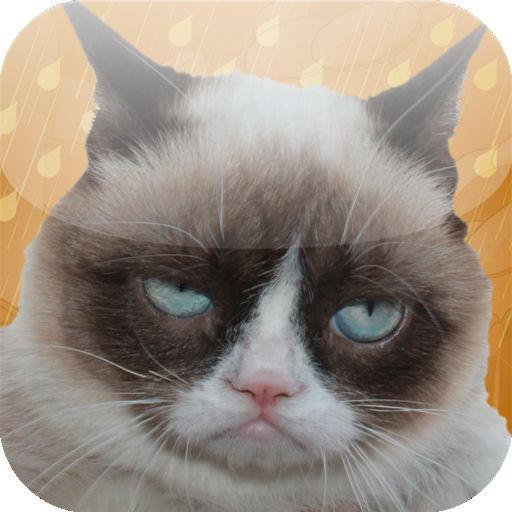 Grumpy Cat Unimpressed