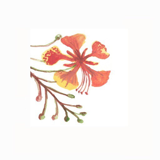 Gulmohar Zazzle Store Watercolor Home Decor