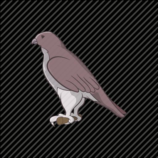 Animal, Cartoon, Falcon, Hawk, Mascot, Sign, Wing Icon