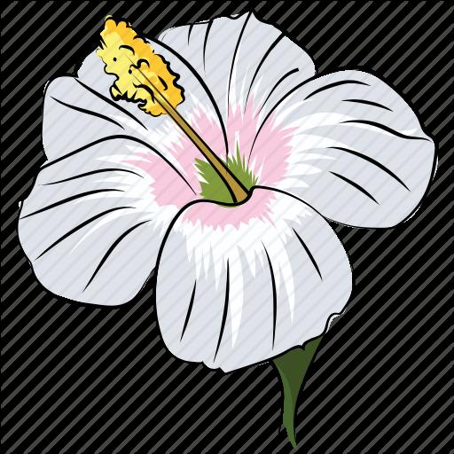 Beauty, Decoration, Flower, Hibiscus Lobatus, Rhododendron