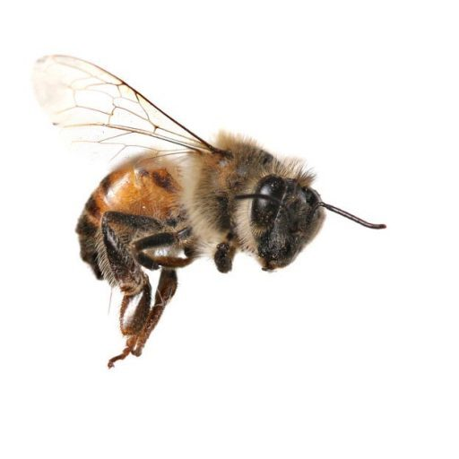 Cropped Site Icon Hive Pro Hive Pro Bee Removal