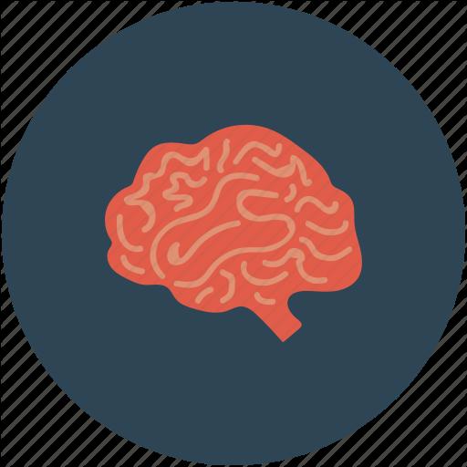 Brain, Brain Mri, Ct Scan, Human Bran