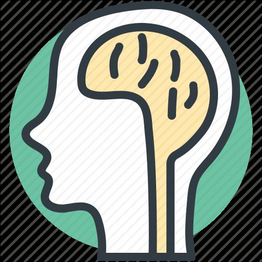 Brain Anatomy, Creative Mind, Human Brain, Human Head, Thinking Icon