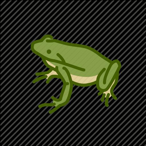 Amphibian, Animal, Batrachia, Freshwater, Freshwater Creature