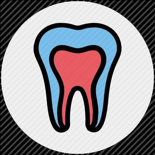 Dental, Dental Treatment, Dentist, Oral Health, Stomatology, Tooth