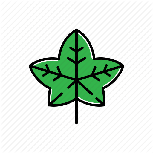 Green, Ivy, Leaf, Nature Icon