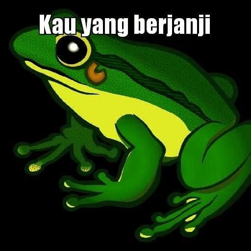 Frog Wink Gif