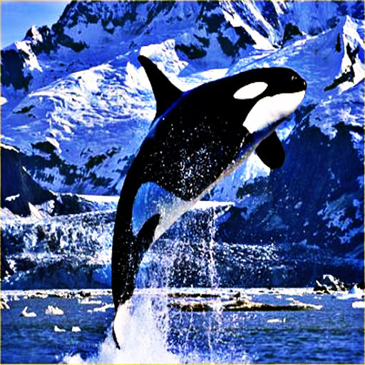 Killer Whale Swimming The Ocean Now Ur Device